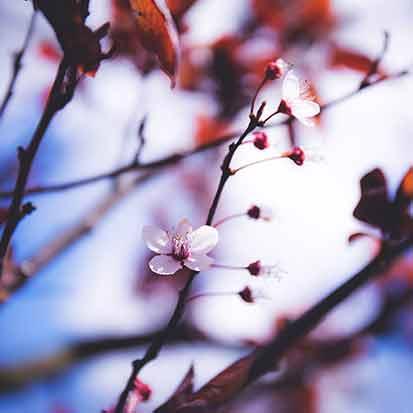 Seasonal specials, holidays, christmas, evensong spa, green lake, wi