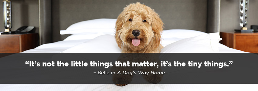 Its not the little things that matter, its the tiny things.  Bella in A Dogs Way Home