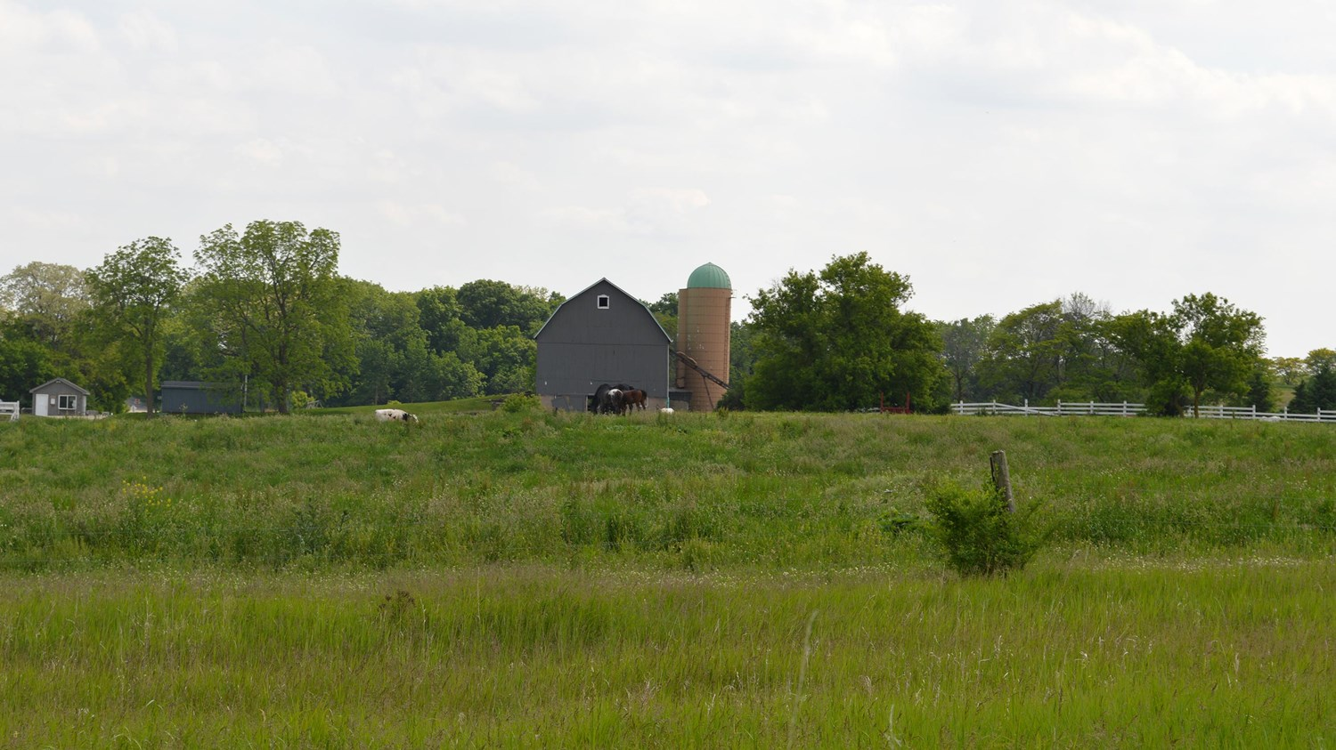 Field with a barn and horses in the distance